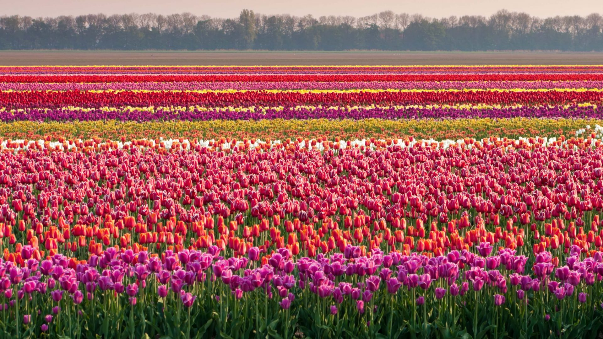 Dutch Delights Shutterstock 77614267